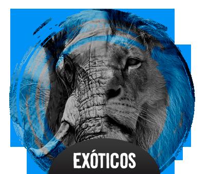 Exóticos